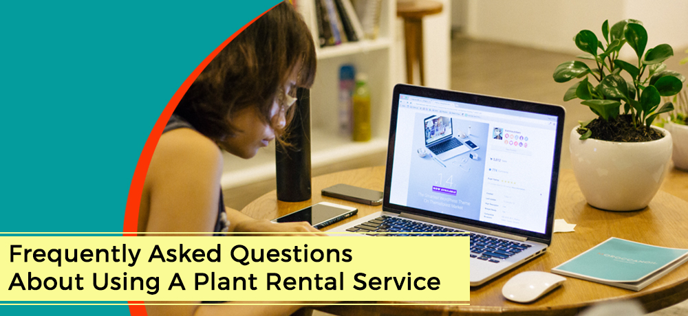 Frequently Asked Questions About Using A Plant Rental Service