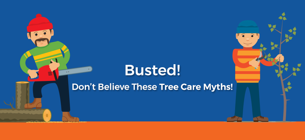 Busted! Don't Believe These Tree Care Myths!