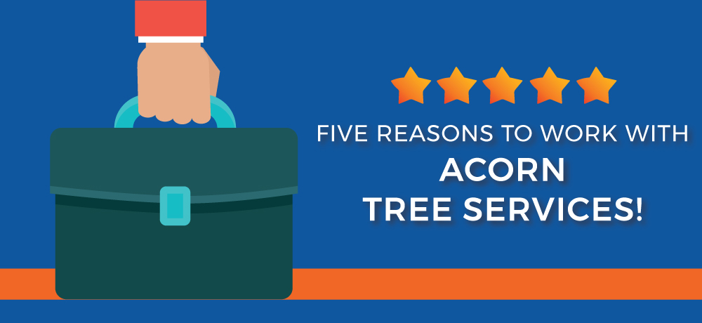 Why You Should Choose Acorn Tree Services!