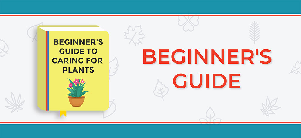 A Beginner's Guide To Caring For Plants