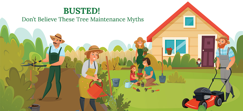 Busted - Don't Believe These Tree Maintenance Myths