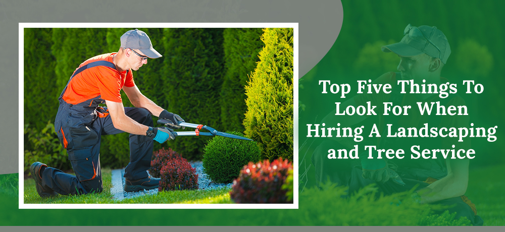Top Five Things To Look For When Hiring A Landscaping and Tree Service
