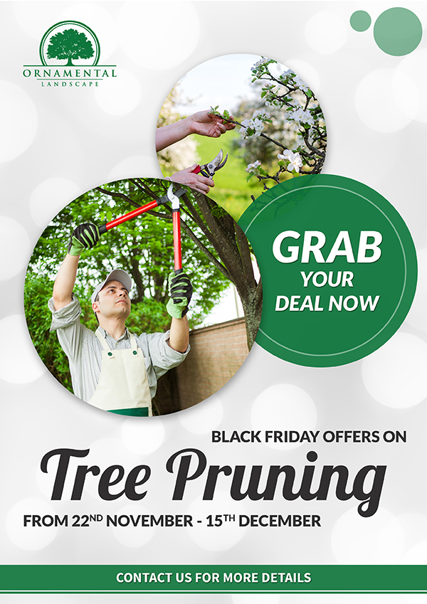 Black Friday Offers on Tree Pruning - Ornamental Landscape Maintainers Ltd.
