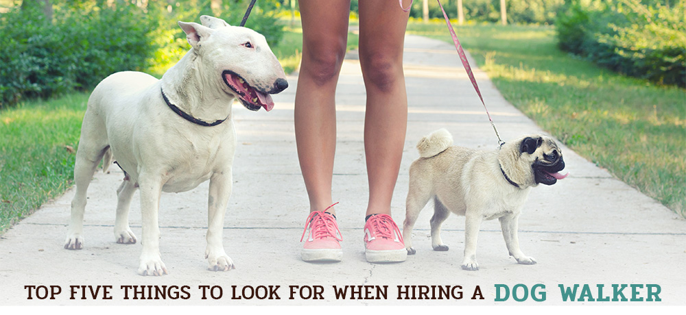 Top Five Things to Look for When Hiring a Dog Walker