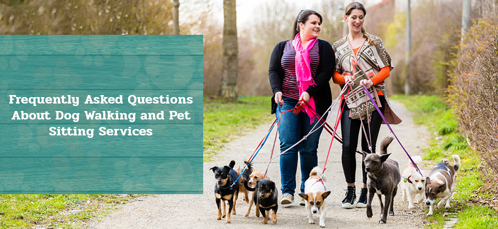 Frequently Asked Questions About Dog Walking and Pet Sitting Services