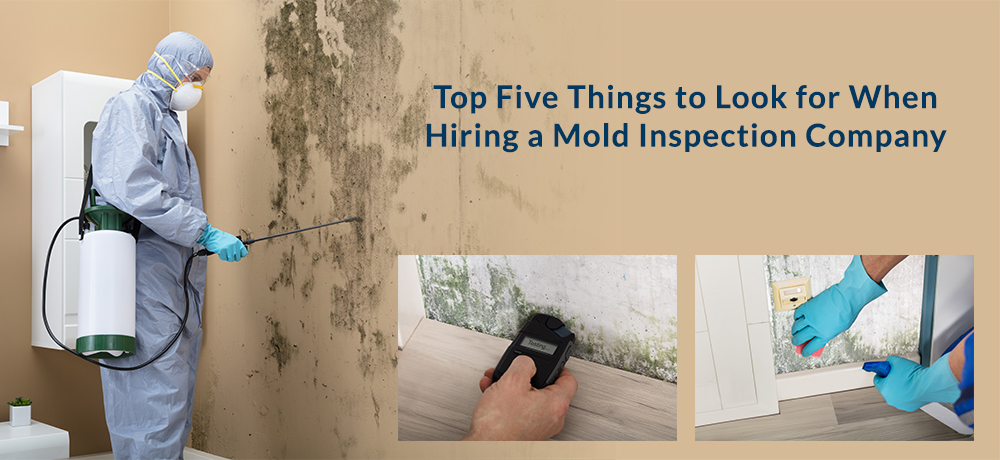 Top Five Things to Look for When Hiring a Mold Inspection Company