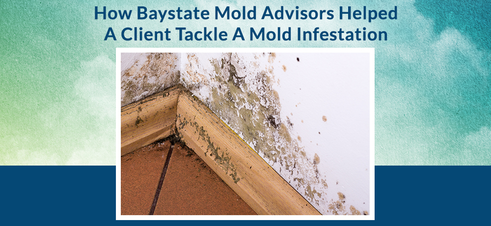 How Baystate Mold Advisors Helped A Client Tackle A Mold Infestation