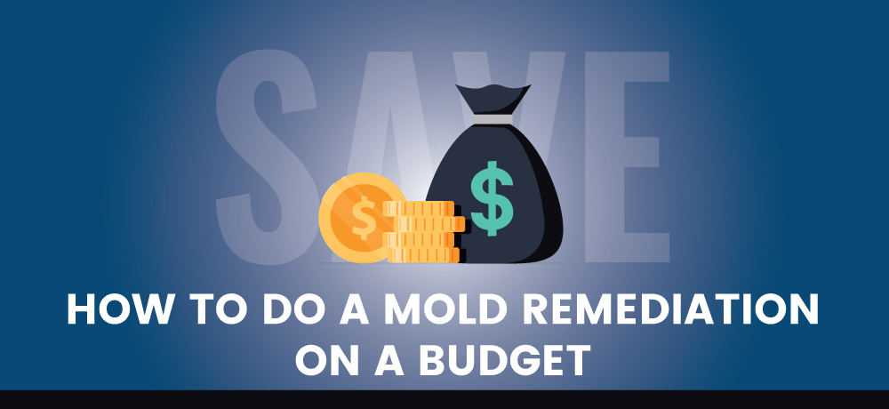 How To Do A Mold Remediation On A Budget