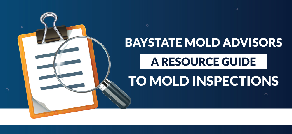 A Resource Guide To Mold Inspections