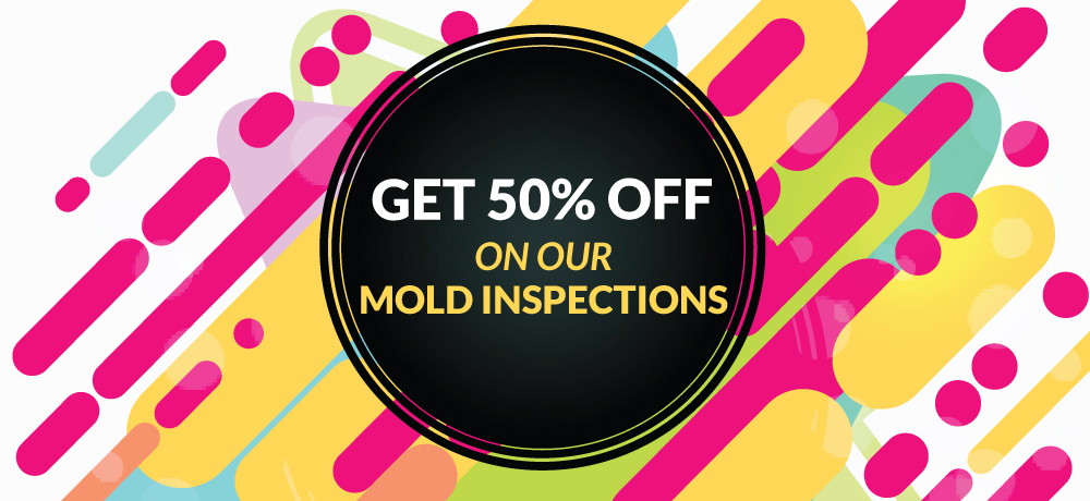Get 50% Off On Our Mold Inspections