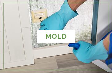 Mold Inspections Washington DC