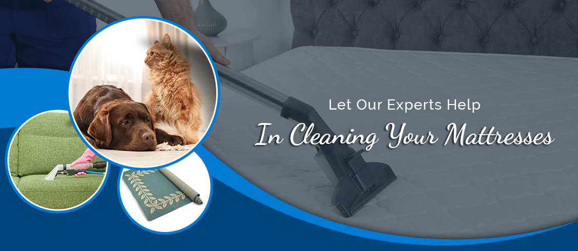 Let Our Experts Help In Cleaning Your Mattresses Cambridge
