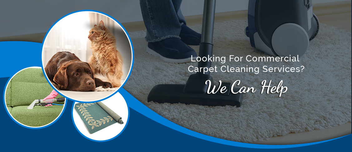 Commercial Carpet Cleaning Services In Cambridge