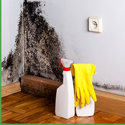 Mold Remover/ Mold Remediation