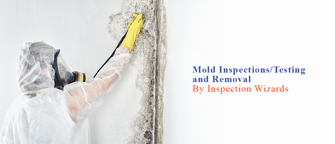 Mold Inspections/Testing and Removal Services
